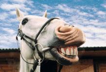 Dentatura del cavallo - vegetariano