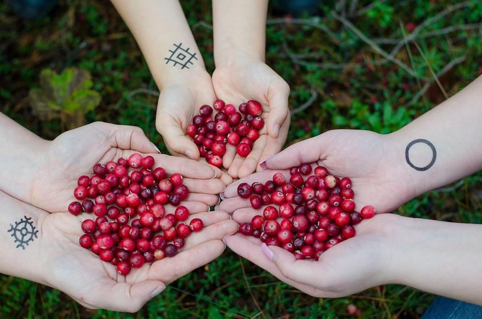Perché il Cranberry è utile nel combattere alcune malattie?