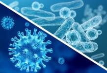 virus-e-batteri